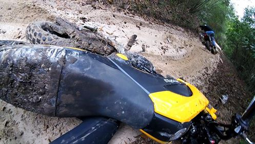Grom Abuse! The Struggle is Real - Offroad Enduro Gromming-15894911_10108865145928370_3061754603398760267_n.jpg
