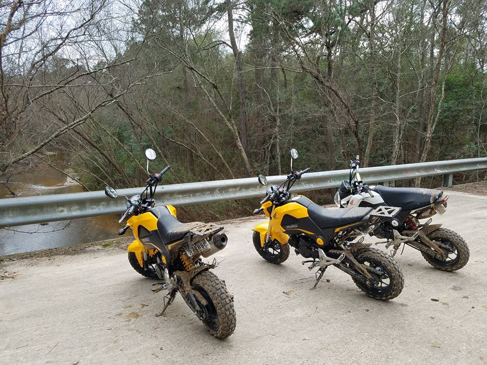 Grom Abuse! The Struggle is Real - Offroad Enduro Gromming-15940910_1229492600419939_860269327123448090_n.jpg